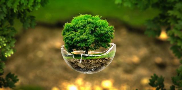 Você sabe a importância da Lei do Meio Ambiente?